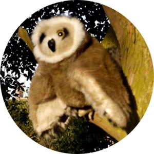 Owlbut